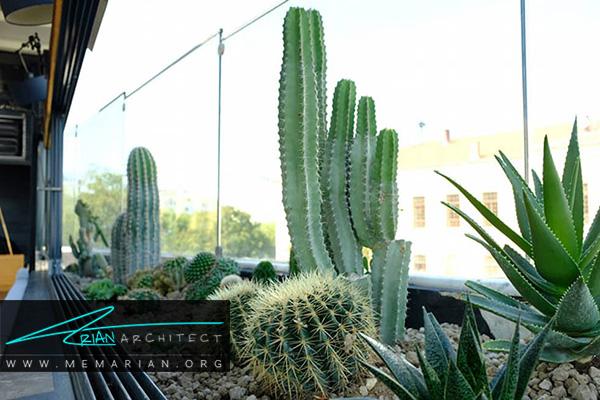 استفاده از کاکتوس های مکزیکی و گل های زینتی در زیباسازی باغچه و حیاط