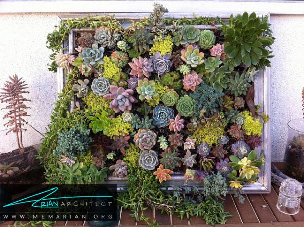استفاده از کاکتوس های مکزیکی در زیباسازی باغچه و حیاط