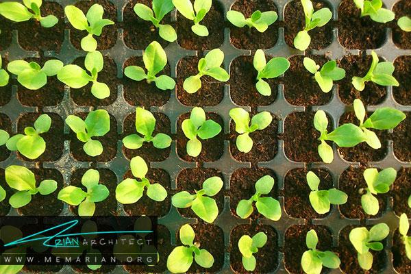 انتخاب گیاه مناسب - طراحی باغچه ارگانیک در حیاط خانه