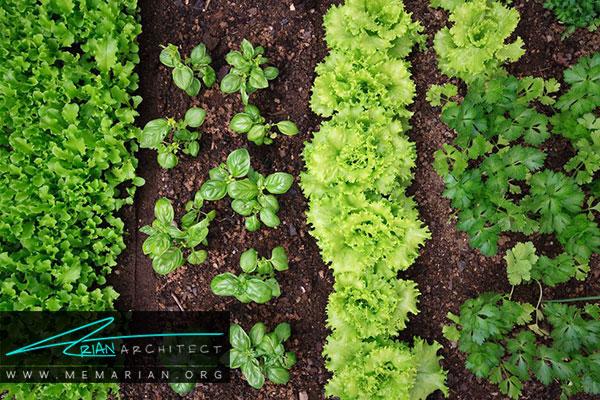 فضای کاشت گیاه در باغچه - طراحی باغچه ارگانیک در حیاط خانه