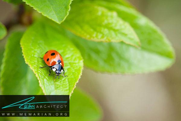 عدم استفاده از آفت کش در باغچه - طراحی باغچه ارگانیک در حیاط خانه