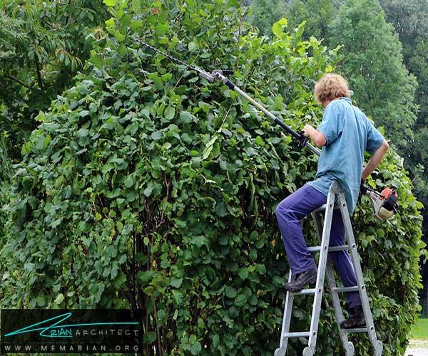 تمیز کردن درختان و درخچه ها - محافظت از خانه