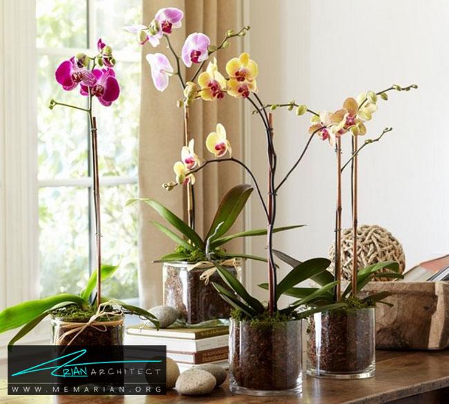 گلدان های مشابه در کنار هم - چگونگی استفاده از گلدان برای دکوراسیون داخلی