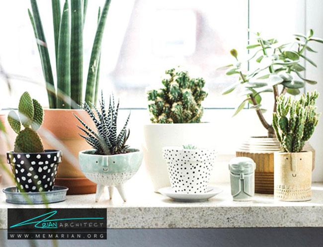 گیاهان خانگی در گلدان ها - چگونگی استفاده از گلدان برای دکوراسیون داخلی