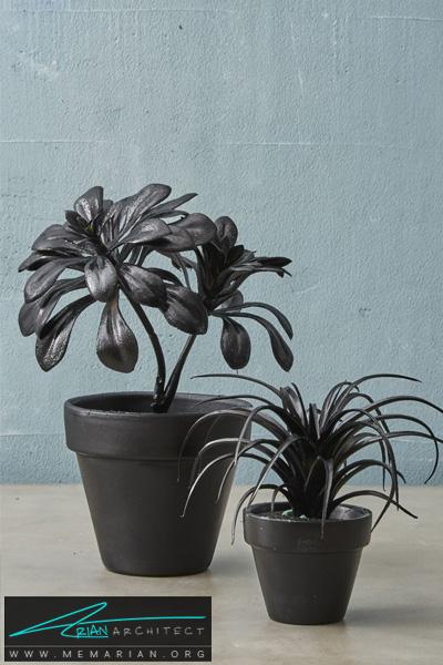 گیاهان مشکی رنگ -دکوراسیون هالووین