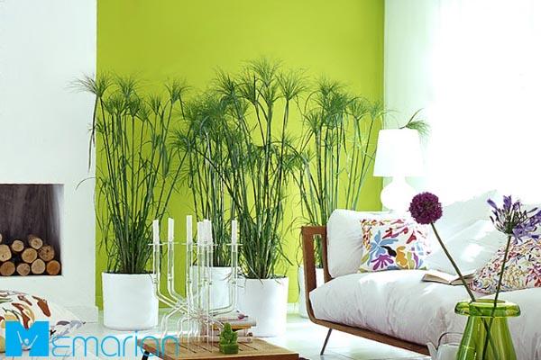 تاثیر رنگ سبز در دکوراسیون | دکوراسیون رنگ سبز (1)