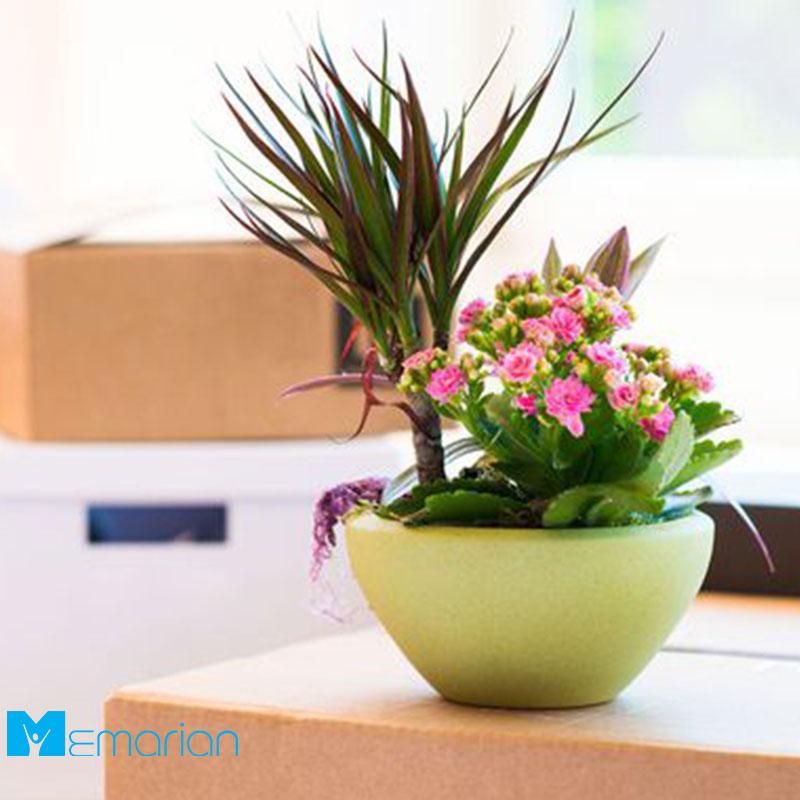 آموزش نگهداری گیاهان آپارتمانی