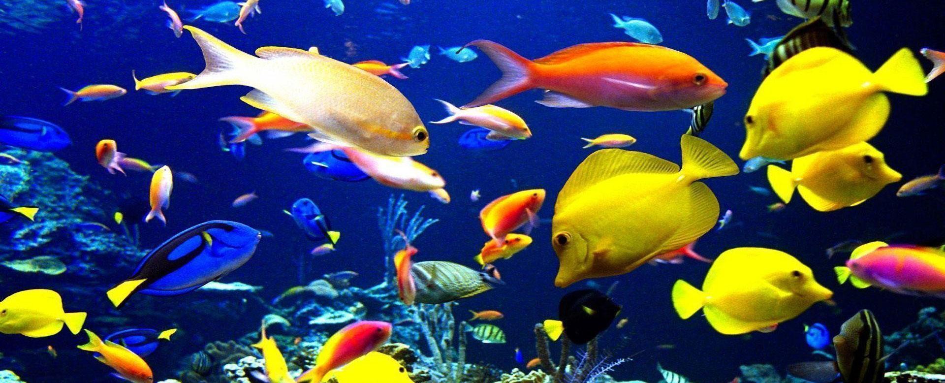 راهنمای نگهداری از ماهیان آکواریومی | معرفی 10 نمونه از ماهی های تزیینی جذاب