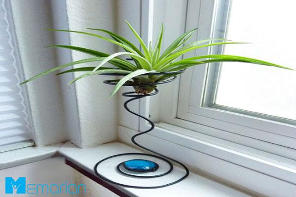 گیاه هوازی، نمونه ای خاص از گیاهان مناسب محل کار