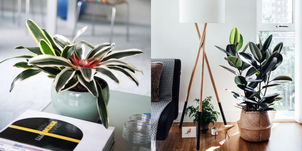 بهترین گیاهان برای استفاده در محل کار کدامند؟